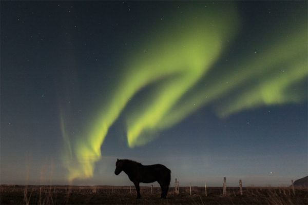 Calm horse in the stillness of the night