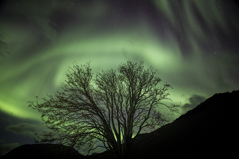 Northern lights and a lonely tree