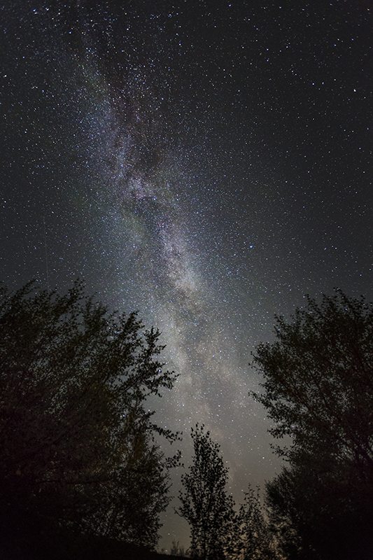 Milky way over Trees