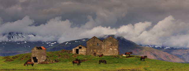 Abandoned farm house and horses