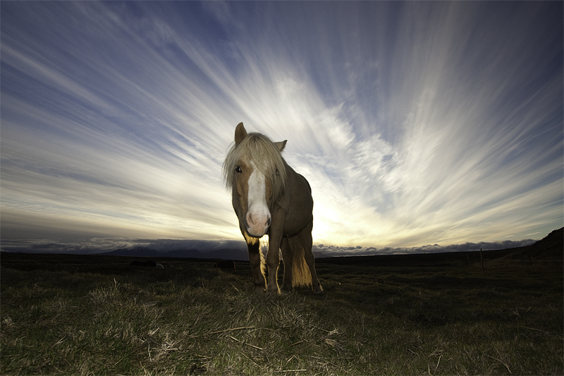 Evening sun and a horse